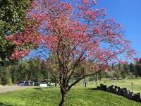 Spring at NCCC